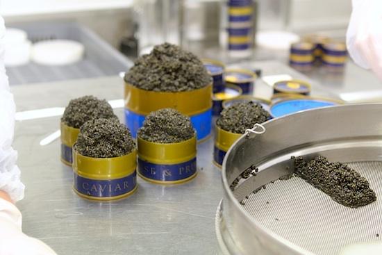 Mise en boite du caviar