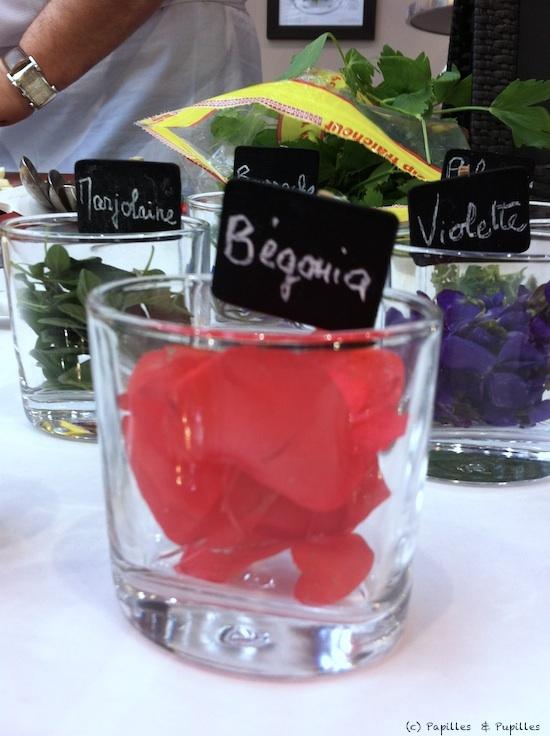 Fleurs comestibles - Begonia