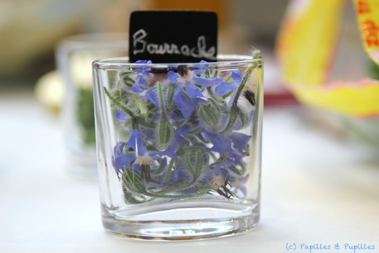Fleurs comestibles - Bourrache