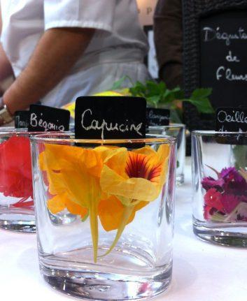 Fleurs comestibles - La capucine
