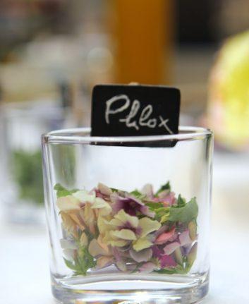 Fleurs comestibles - Phlox