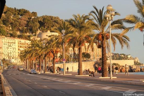 Nice, les palmiers