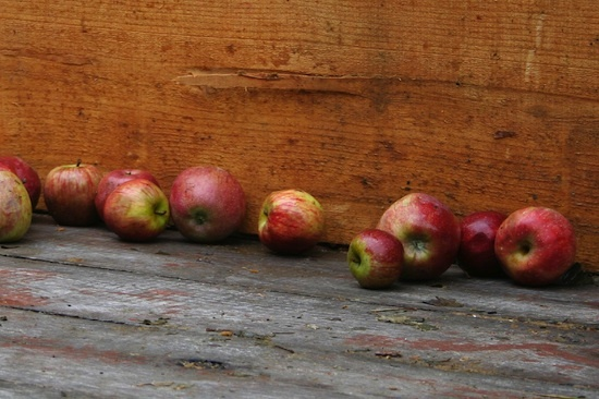 Pommes à cidre ©zizzybaloobah CC BY-NC 2.0.jpg