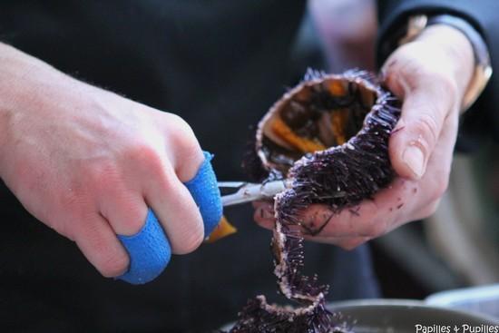 Préparation des oursins