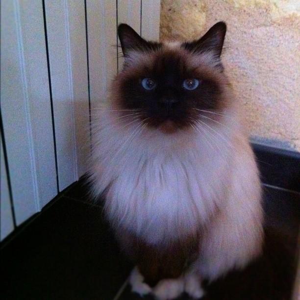 Collée au radiateur #cat