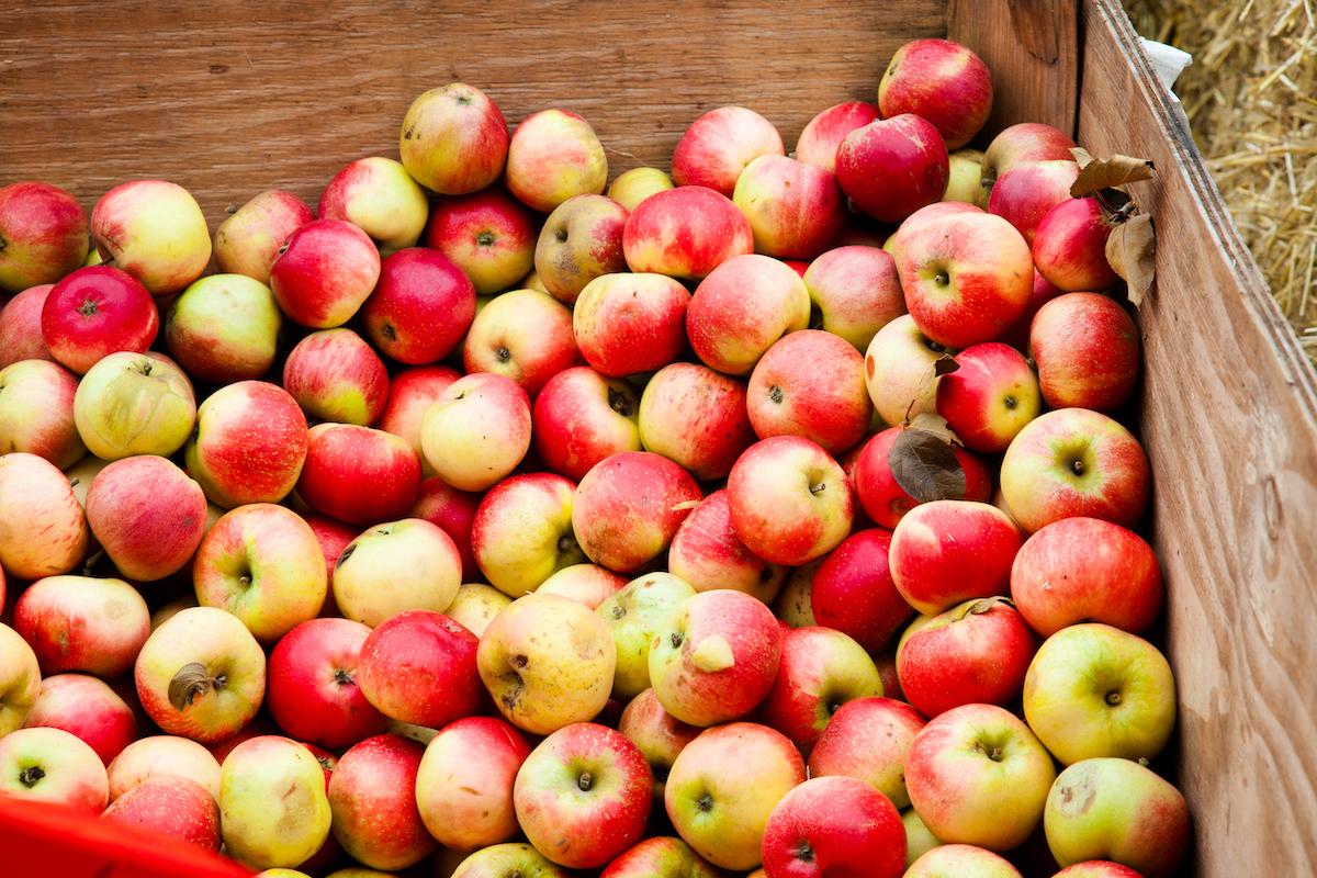 Pommes à cidre ©Claire Plumridge shutterstock