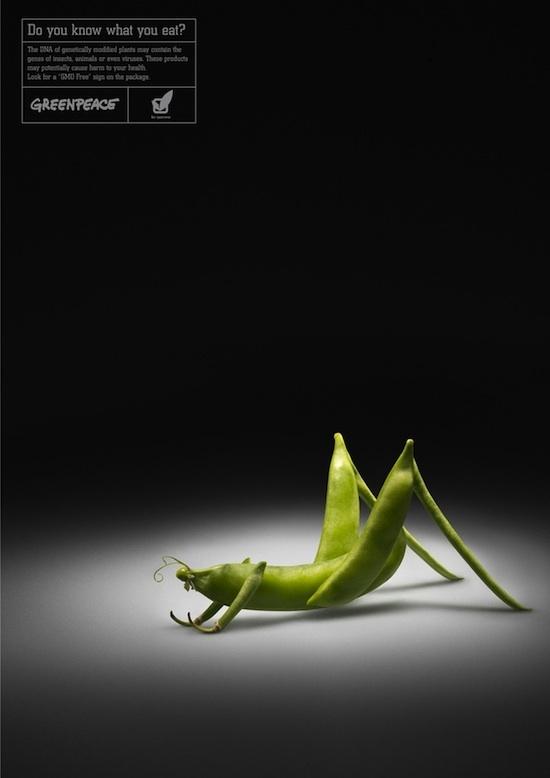 haricot criquet