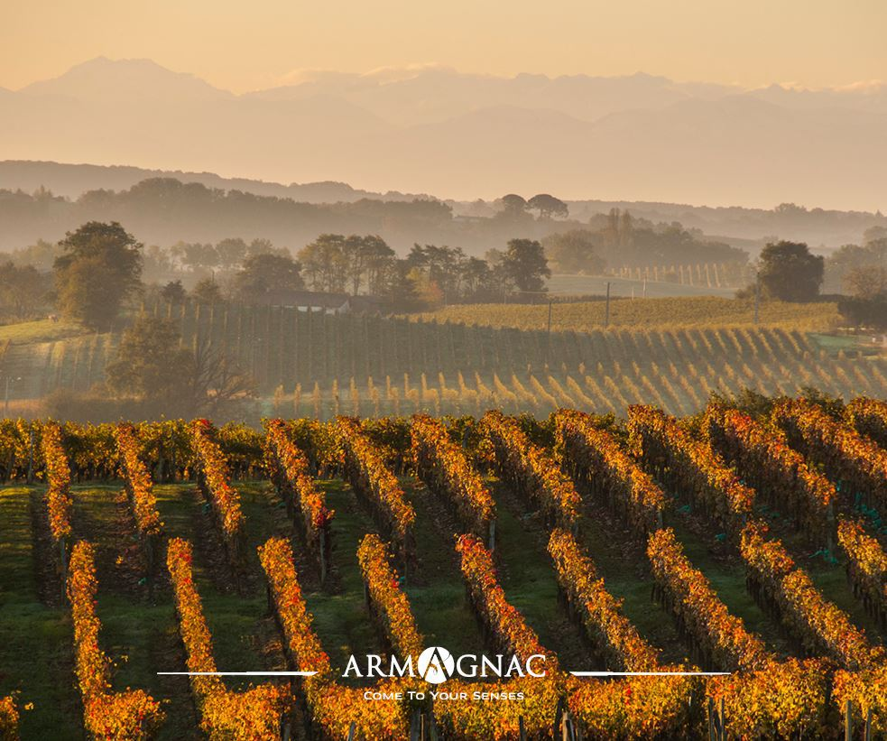 Armagnac ©BNIA