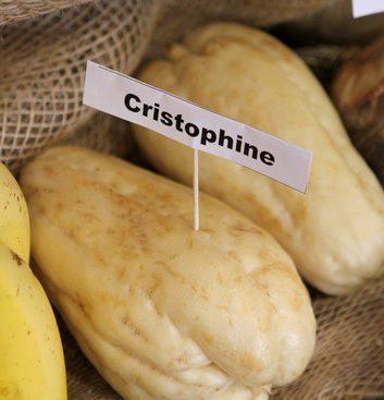 Cristophine