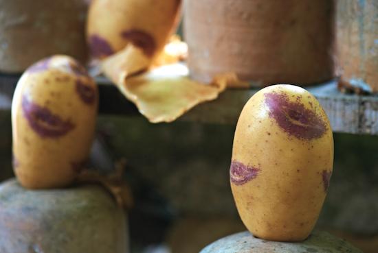 Pommes de terre Blue Belle