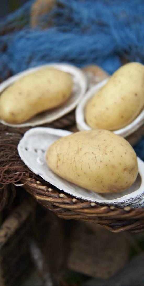 Pommes de terre Dolwen®