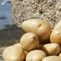 Pommes de terre Princesse Amandine®