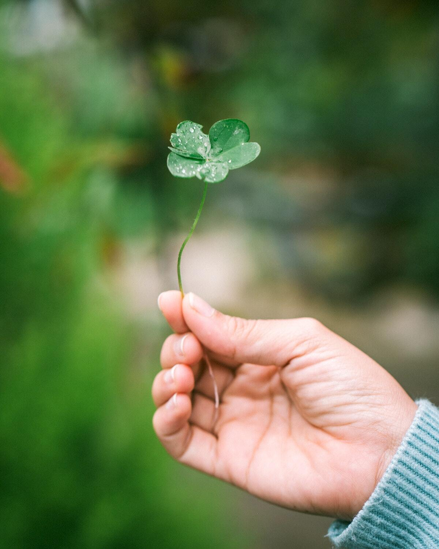 St Patrick ©Harris Vo on Unsplash