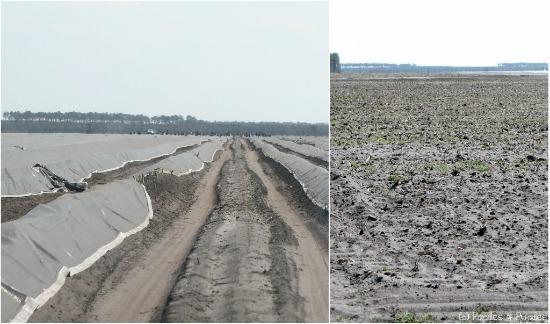 Les champs et la terre noire et sableuse