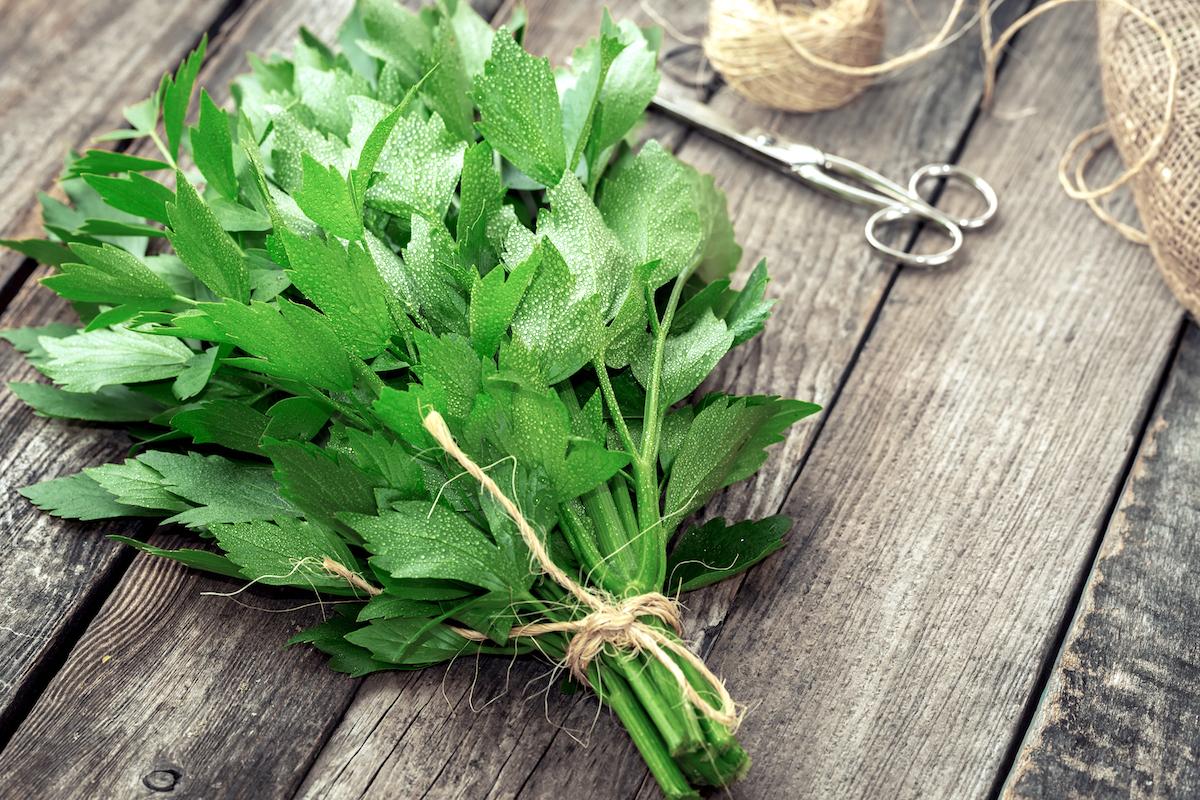 Livèche ou herbe à Maggi