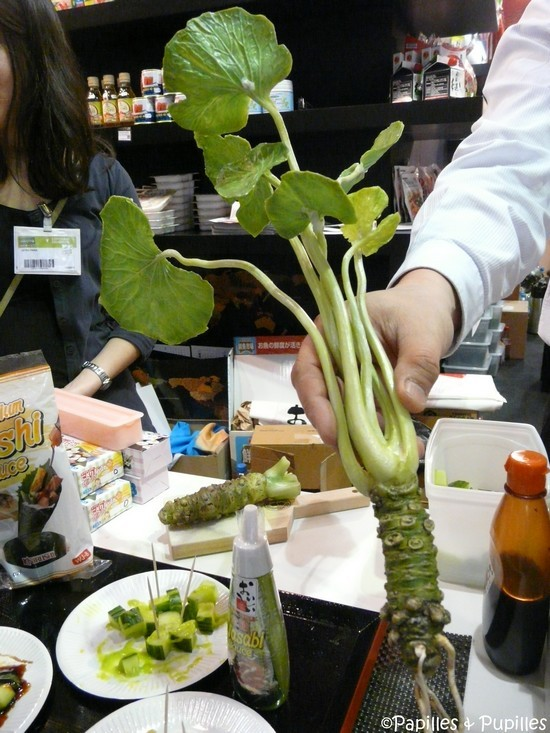 Racine de wasabi