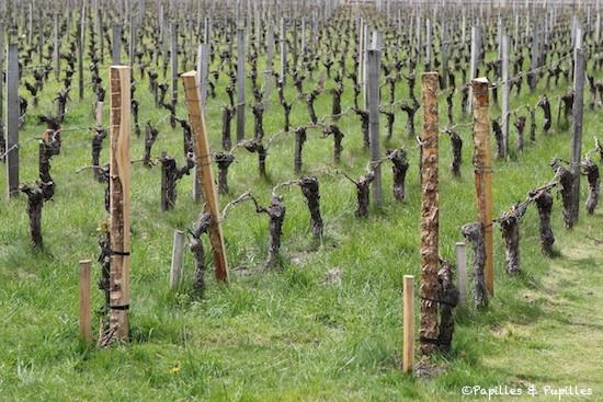 Vignes de Pape Clément