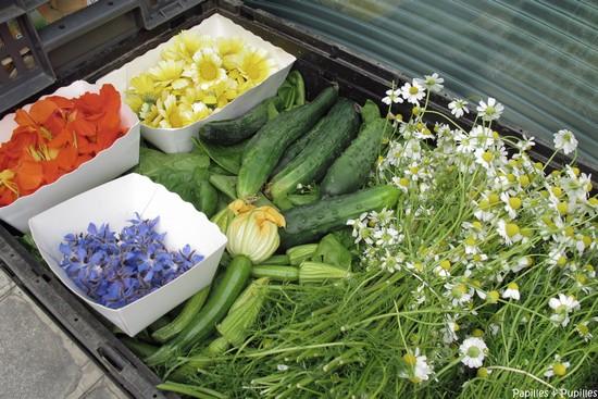 Fleurs et légumes