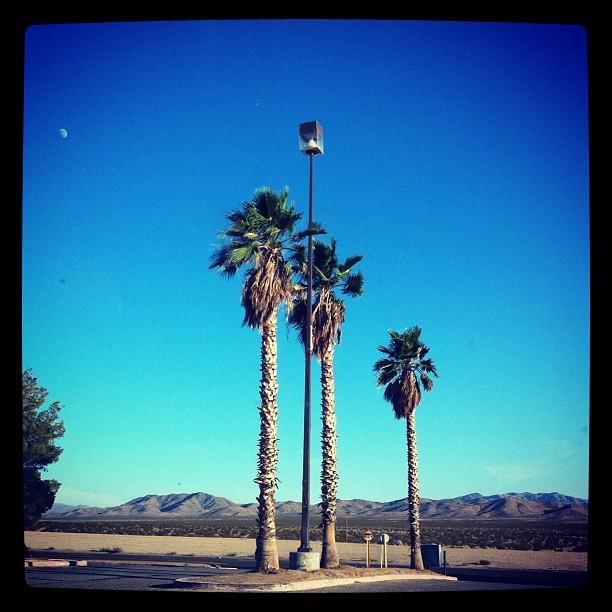3 palmiers, le ciel bleu et la Lune