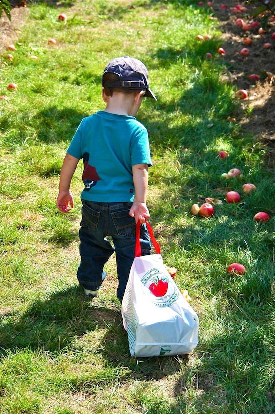 Récolte des pommes ©The Birkes Attribution 2.0 Générique (CC BY 20)