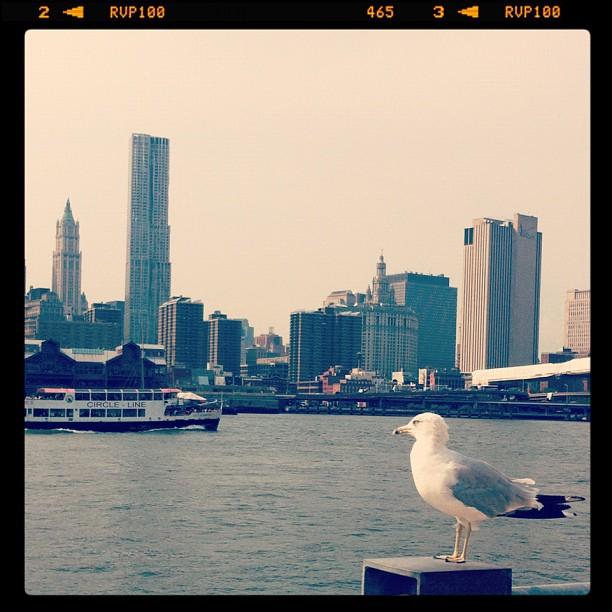 Manhattan, vu de Brooklyn #newyork