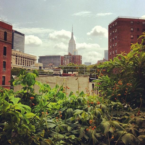 L'#empirestatebuilding vu de la #HighLine #newyork