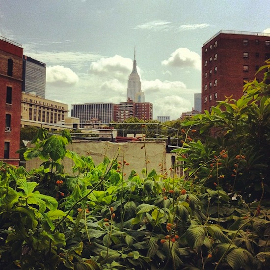 High Line, Chelsea