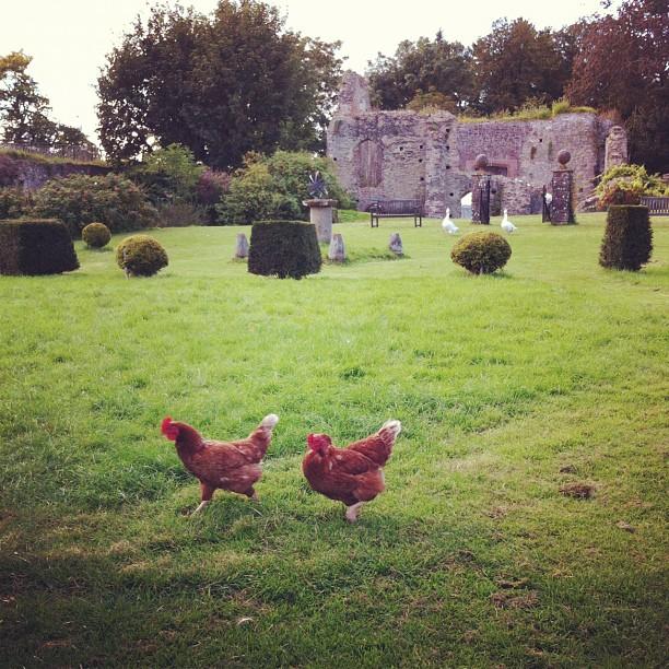 Hello les poulettes !