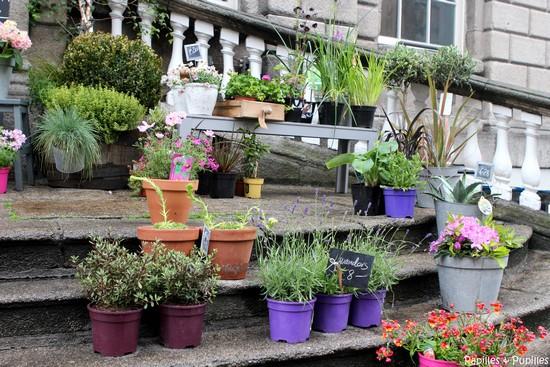 Fleuristes Dublin