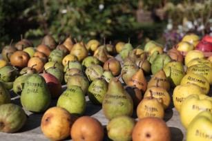 Pommes et poires ©Alexandre Dulaunoy Licence CC BY-SA 20