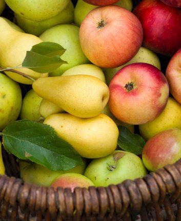 Pommes et poires ©Arina_C shutterstock