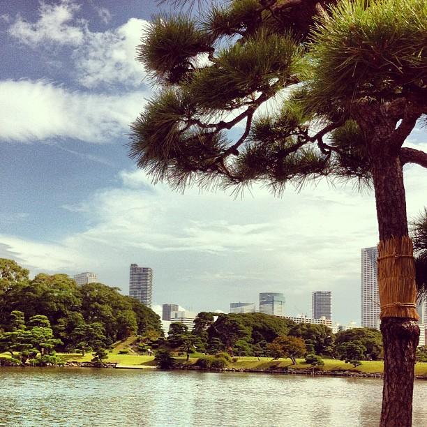 Hamariku - Tokyo