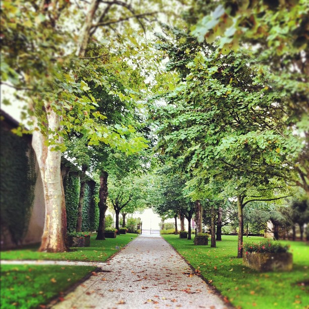 Château Rauzan-Ségla - Ce petit chemin qui sent ... Le raisin #bordeaux #Médoc #wine #vin
