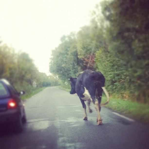 Rencontre surprenante sur les routes du Médoc ^_^