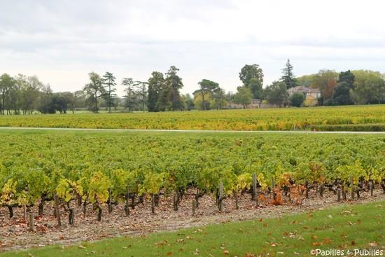 Vignes Margaux - Allez, on rentre