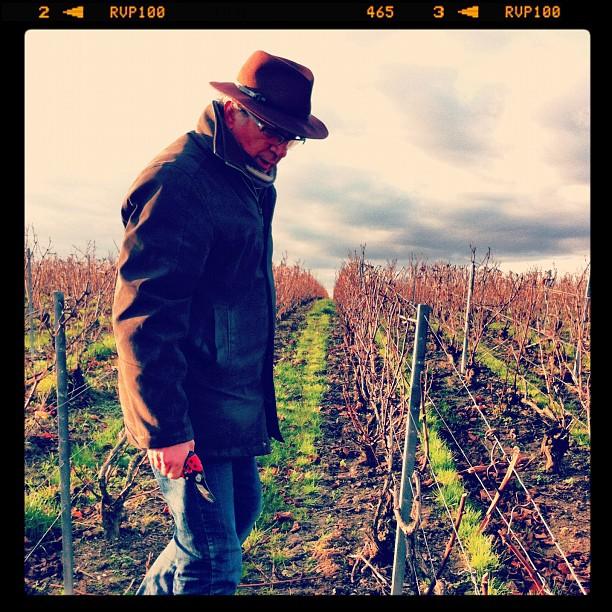 Taille en Chablis dans le vignoble Champenois