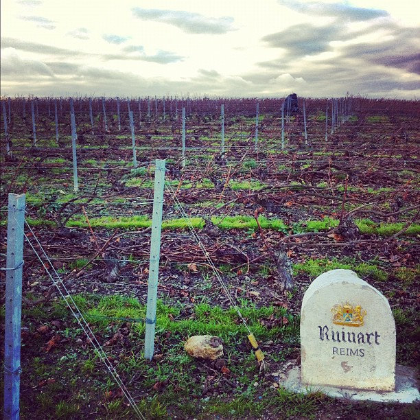 En champagne 1 hectare vaut 1 million d'euros