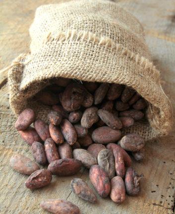 Fèves de cacao ©page frederique shutterstock