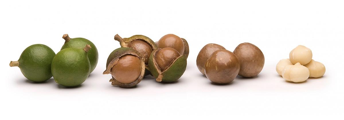 Noix de macadamia - Les différentes étapes