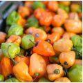Piments Habanero