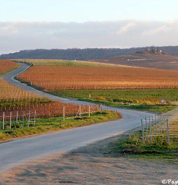Champagne - Les vignes - Automne