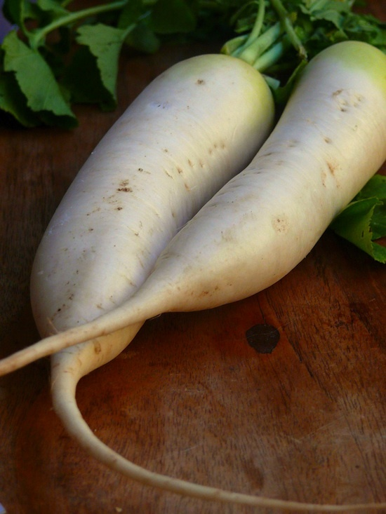 Daikon © Mr & Mrs Stickyfingers