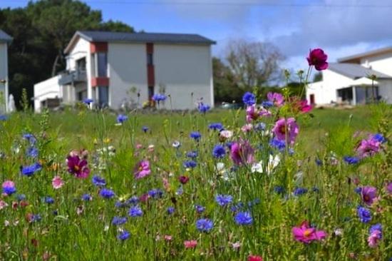 Fleurs, Bretagne