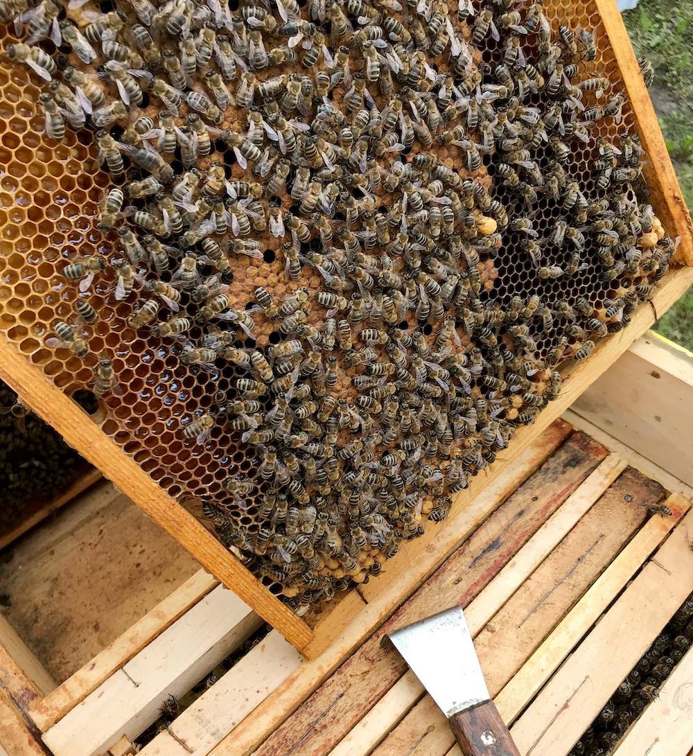 La récolte du miel ©OLEKSANDR75 shutterstock