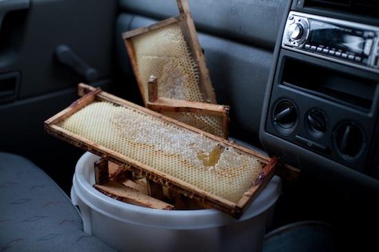 Récolte du miel ©reway2007 CC BY-NC-SA 2.0