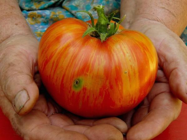 Tomate ©Denis and Yulia Pogostins shutterstock