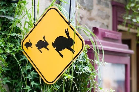 Traversée de lapins ©VanDerMouche CC BY-ND 2.0
