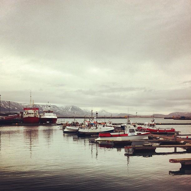 Reykjavik - le port