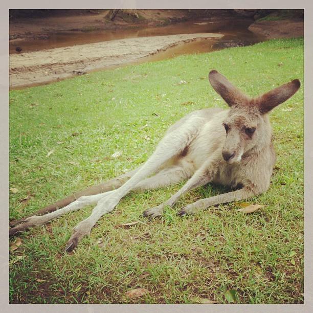 Salut chérie ! #australia