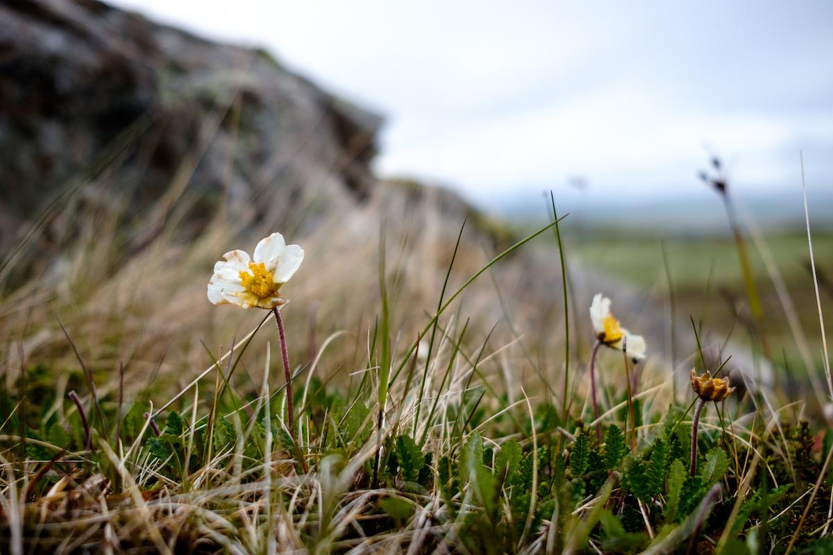 Iceland ©MobyRichard CC BY-SA 2.0